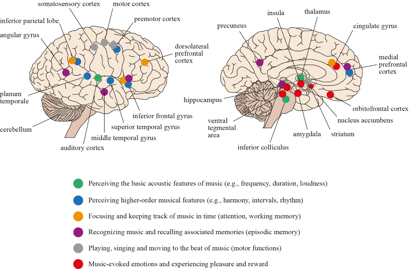 View of Music Therapy and Neuroscience: Opportunities and
